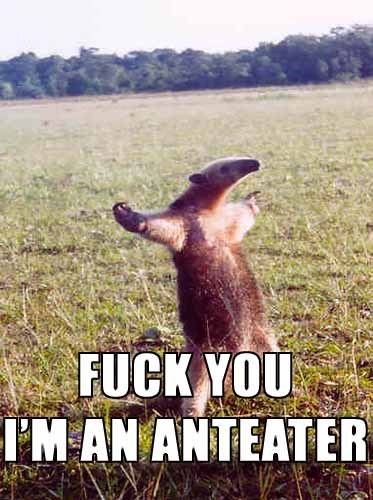fuck_you_im_an_anteater.jpg